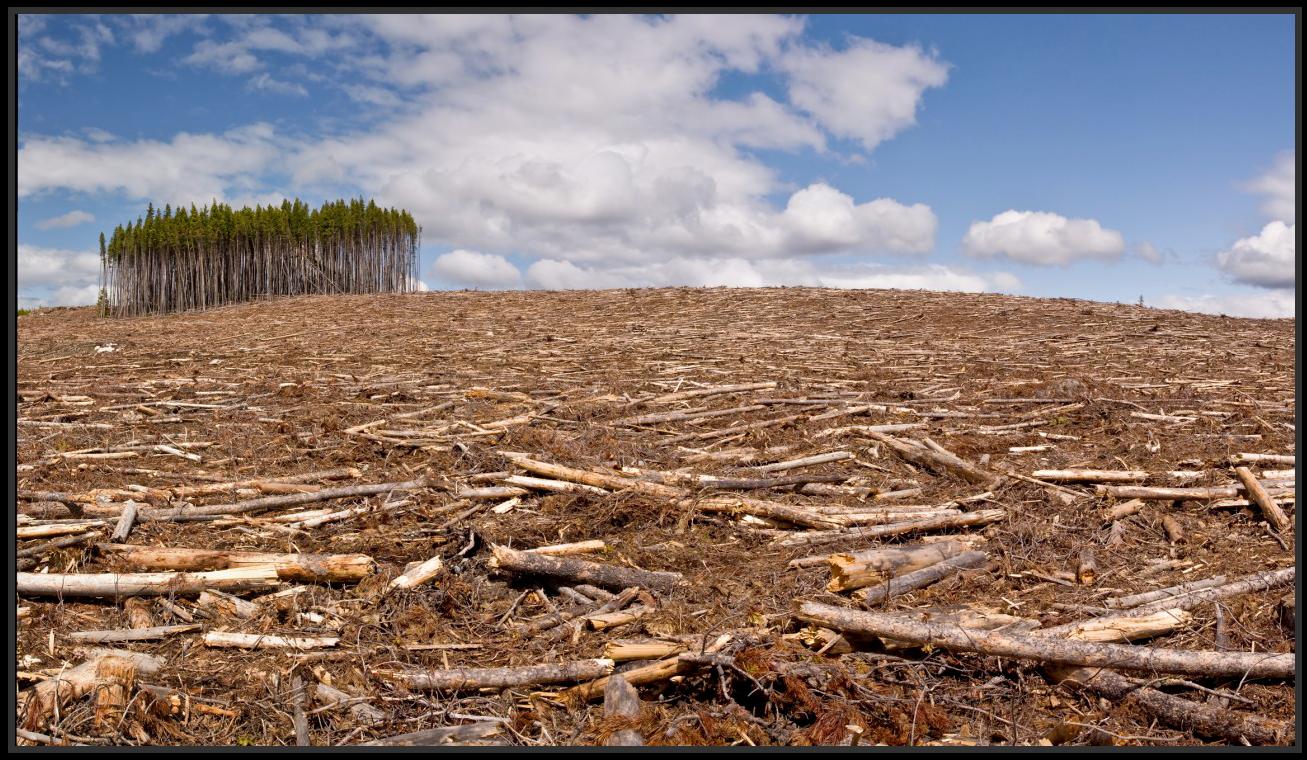Comment tes recherches permettent de reforester la planète